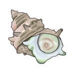 青空レストラン真つぶ貝の取り寄せとレシピを紹介!北海道様似町ゲストと動画についても